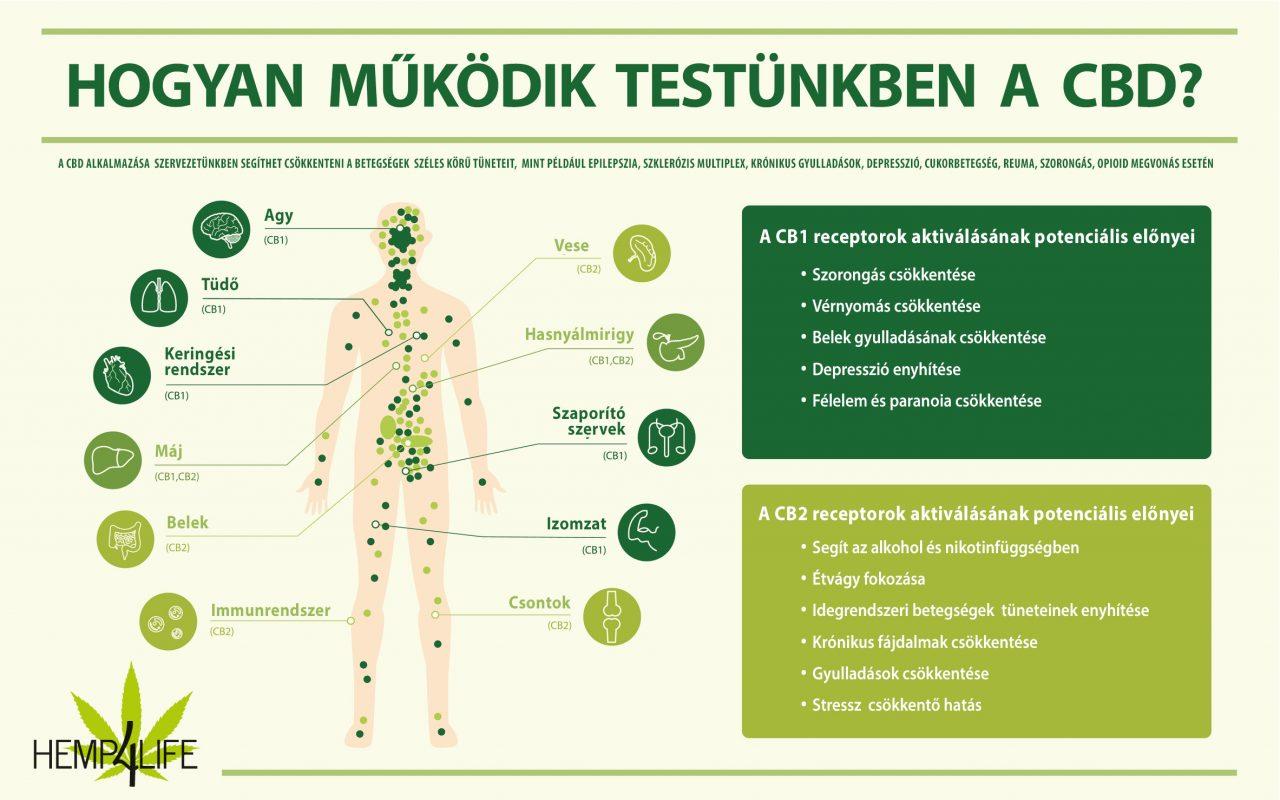 hemp4life endokannabinoid rendszer